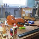 new viola in progress